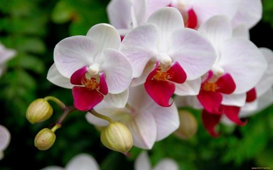 orquideas-a04a24