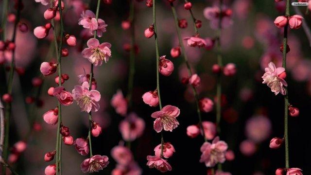 Flowers-Wallpaper-Background-Twitter