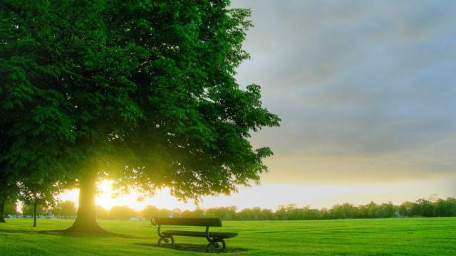 tree-grassland-bench-nature-1920x1080