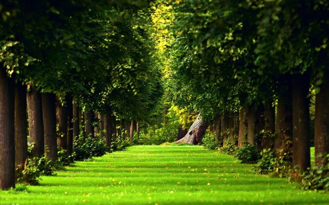 beautiful-green-path-in-the-forest-hd-nature-wallpaper_5120x3200